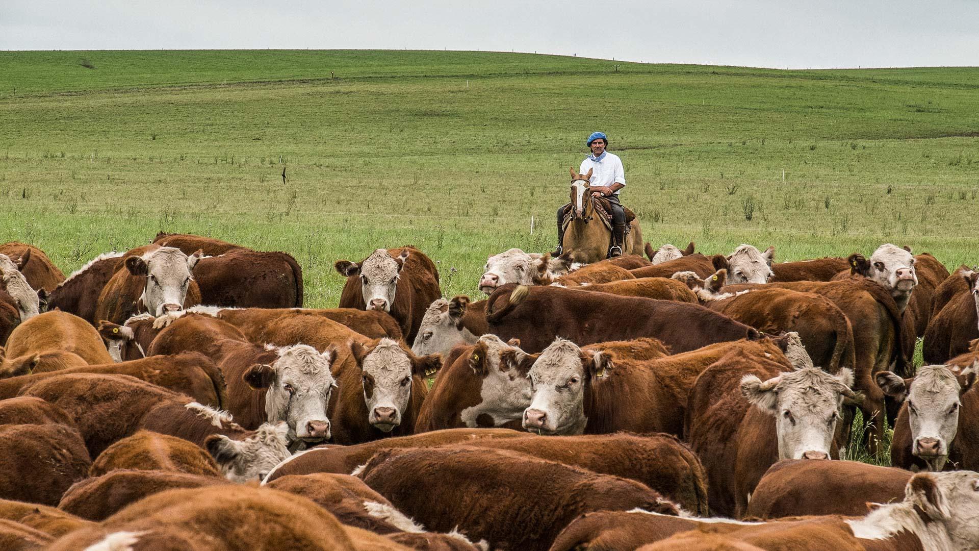 Ojo de Agua Beef Natural Farming Feeding