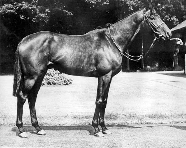The first stallion, Kendal